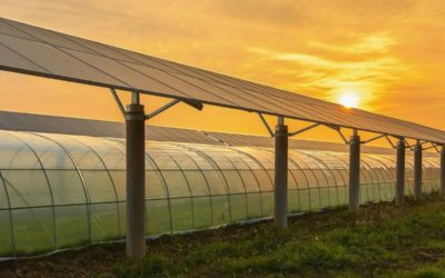 A Greener Green: Solar Power The Best Option For Cannabis Sustainability
